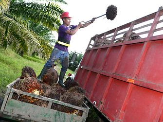 Palm oil farmers are also shown how to make sure their produce complies with sustainable palm oil certification criteria – which can open up global markets and help improve farmers' incomes.